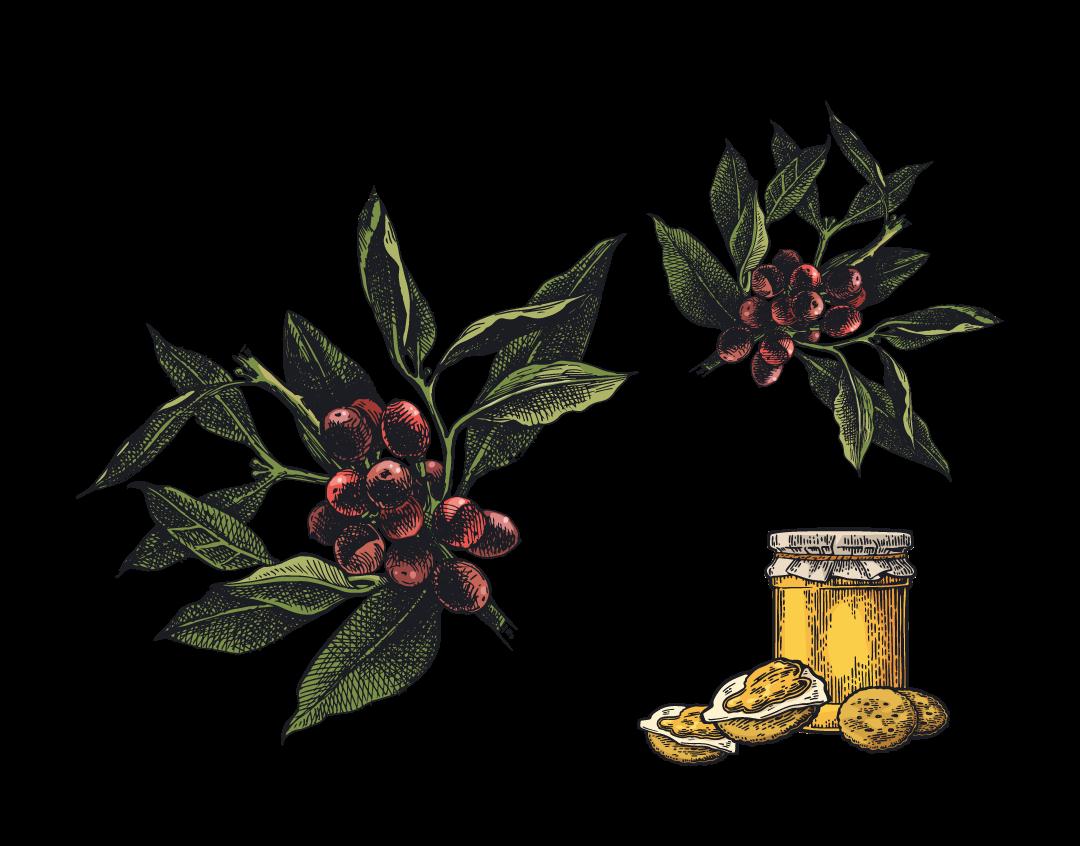 Espresso Blend Illustration web