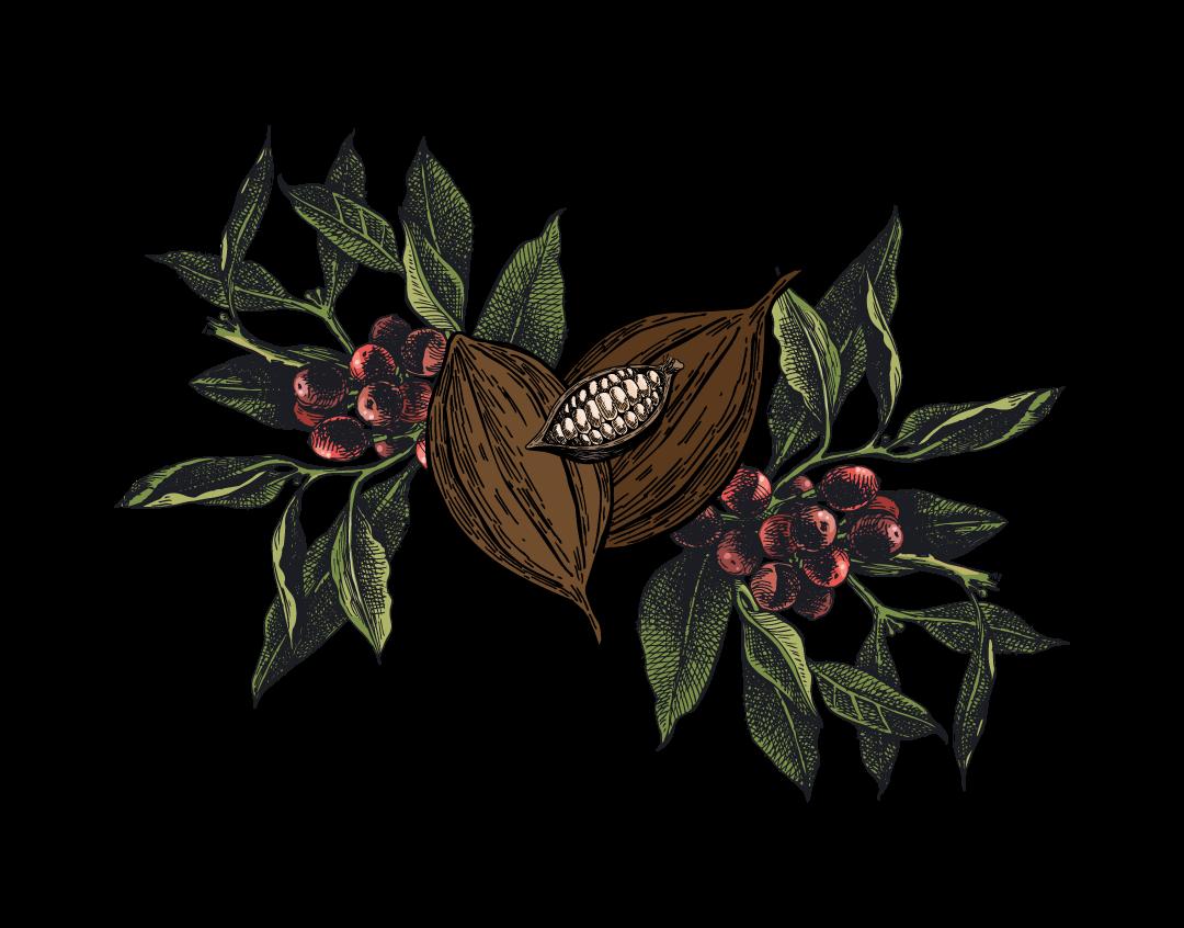 Guatamala Chocolate Block Illustration web