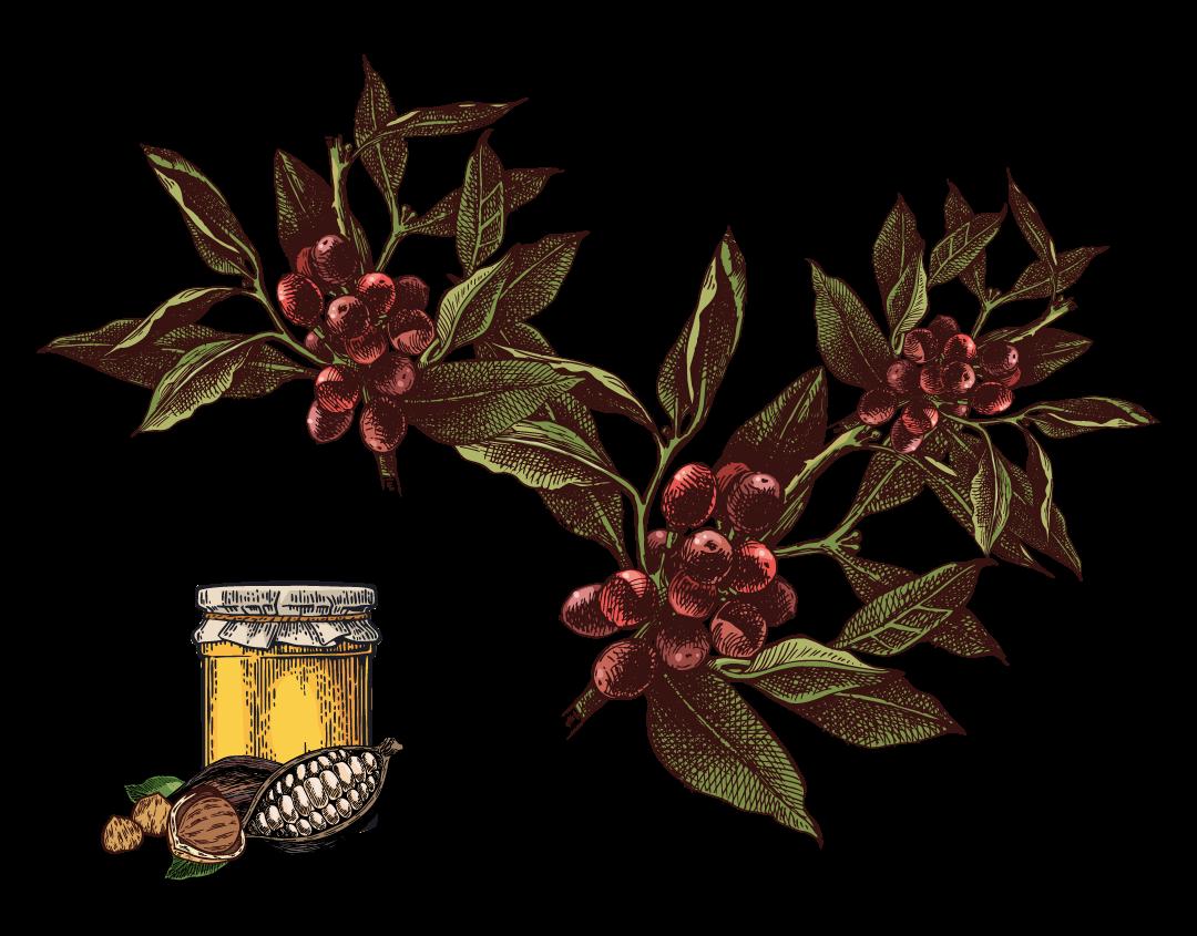 Malawi Gold Illustration web